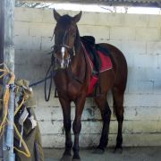 Bay in Stables Image