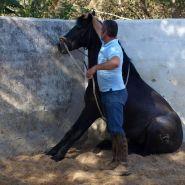 Horse sitting Image