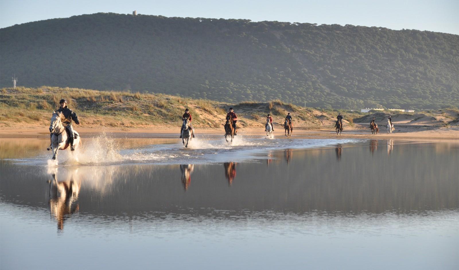 Horses Stream Image