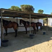 Bays in their stable Image