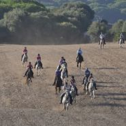 Field gallop Image